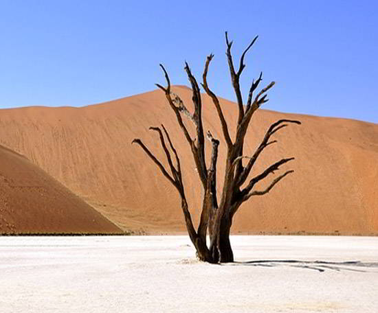 IL DESERTO, poesia di Kesar Singh